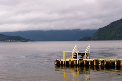 Yellow Dock On Foggy Lake