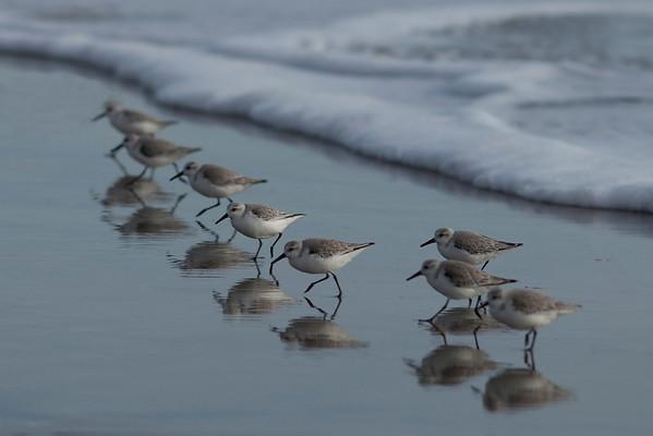 Seacliff Beach, 2-20-2012