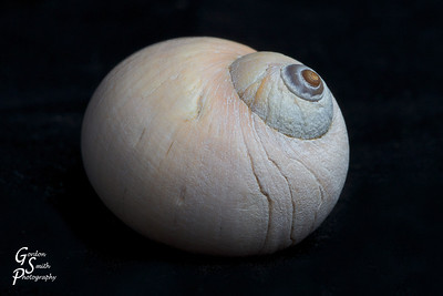Shell from the Sea