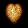 Even Broken Hearts Can Shine Again