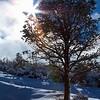 Arizona sunshine post storm. 1/10