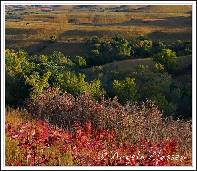 Sumac in the Flint Hills near Tuttle Creek Dam, Manhattan, Kansas