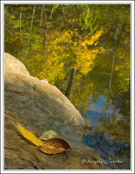 Fallen leaves on a boulder, Ernie Miller Nature Center, Johnson Co., Kansas