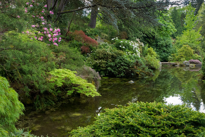 Spring Blossoms and Pond