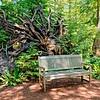 Bench in front of fallen tree's roots.  Bloedel Reserve.