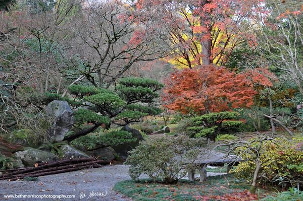 Seattle Arboretum 11-2011