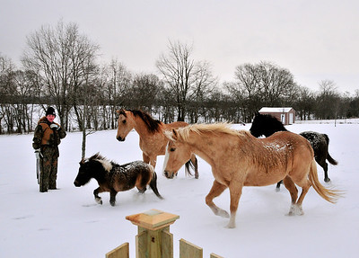 Neighbors Horses visiting in snow