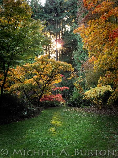 Fall Afternoon <br /> Washington Park Arboretum<br /> Seattle, WA<br /> <br /> October 23, 2013