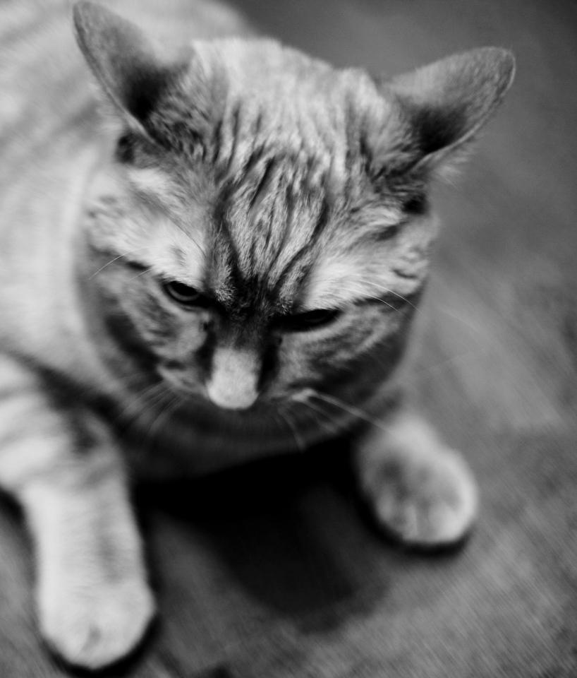 Ike, our Kitty Pimp