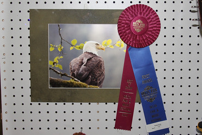 Delta Fair Best of Show in Photography, photo by Gary Cox, picture taken in Ketchikan Alaska.  In all fairness, Carol did pick out the matt and recommended that I submit this picture!
