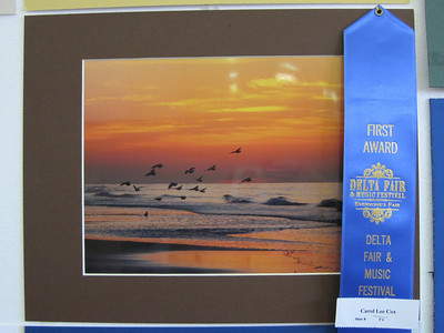 Winning first place photo by Carol Cox - Category Nature, at the Delta Fair.
