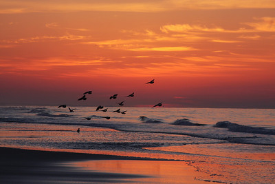 """First place winner of Delta Fair photo contest, category """"nature"""".   This photo was taken during sunrise at the beach in Destin Flordia.  Photo by Carol Cox"""