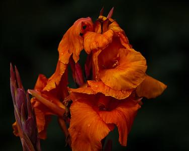 September 2011 flowers