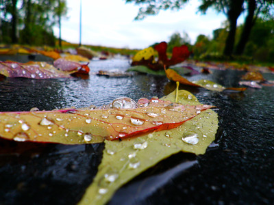 Rain drops on an autumn leaf  Photographer's Name: Morgan Elbert Photographer's City and State: Alexandria, IN