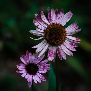September 2012 flowers