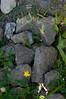 sampling of large rocks