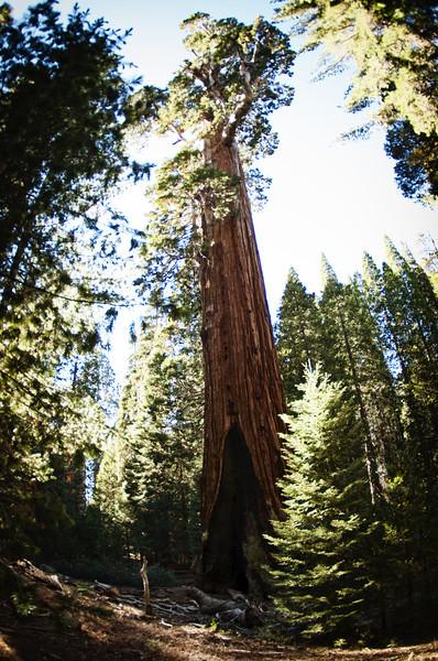 Sequoia2 128