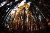 Sequoia 30
