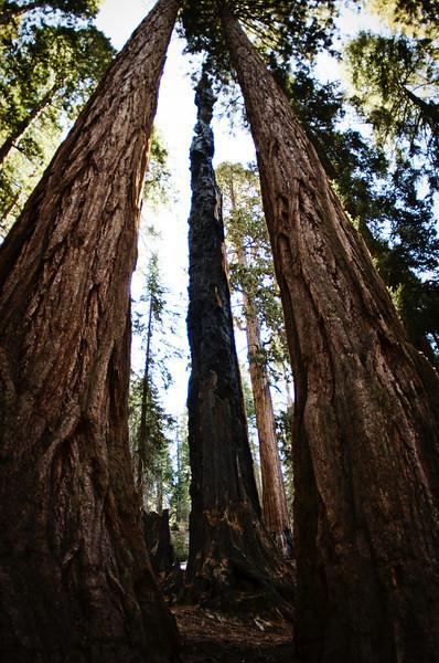 Sequoia2 92