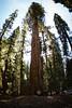 Sequoia2 81
