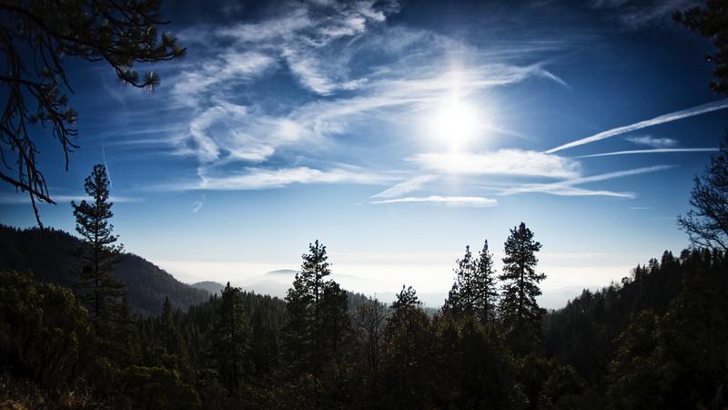 Sequoia2 149