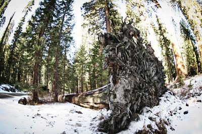 Sequoia2 61