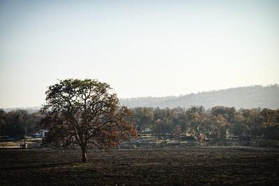 Sequoia2 154