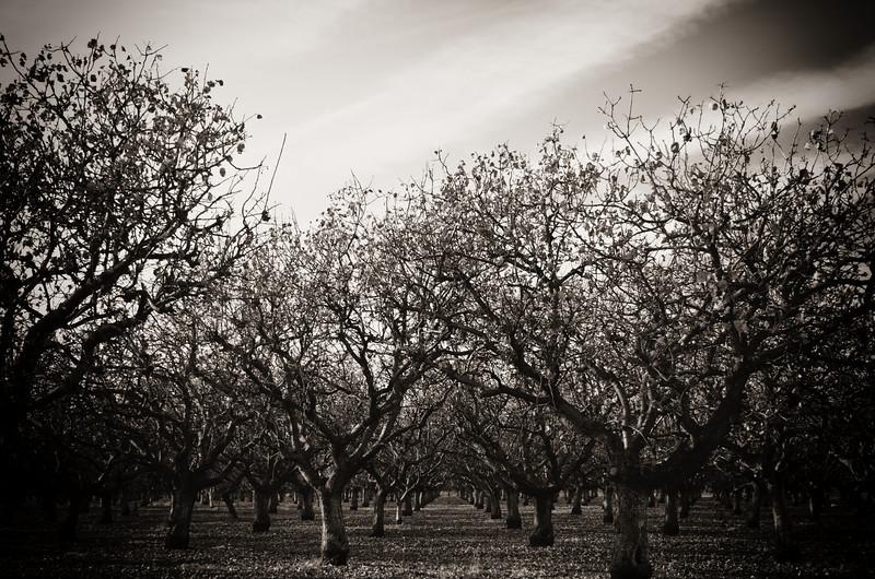 Sequoia2 161