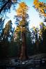 Sequoia 15
