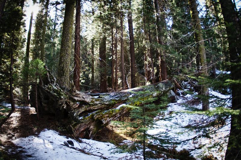 Sequoia2 67