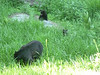 Bears and cubs at Dorst Creek campground.