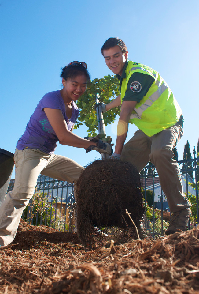 AmeriCorps members and volunteers work with local non-profit Our City Forest to plant shade trees for elderly residents in San Jose, CA.