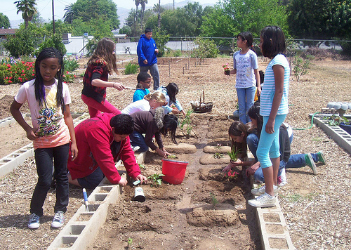 Emerson Elementary School Green Team students volunteer their lunch recess to work in the garden (composting, planting, exploring and experimenting) each day with a passion.
