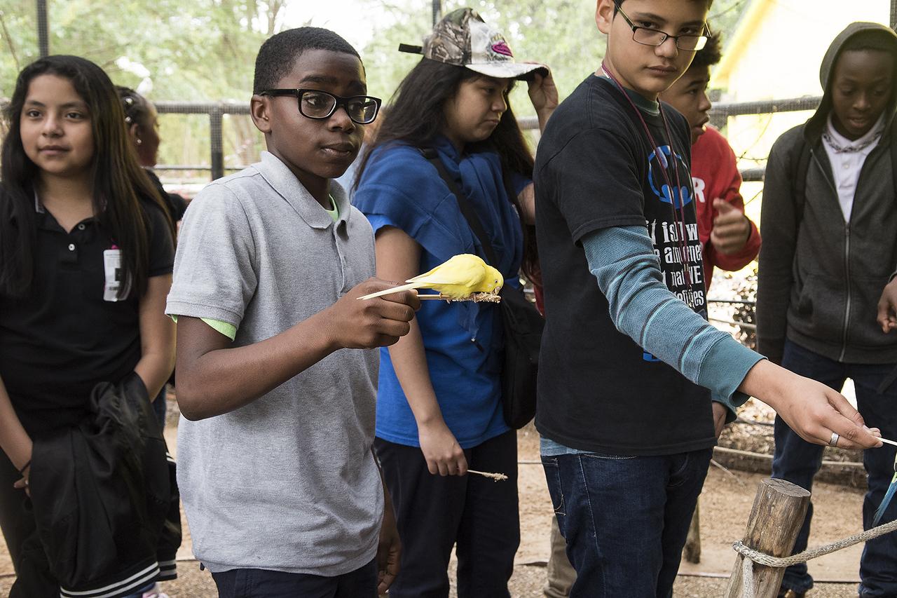 Boulter Middle School sixth grader De'Jaylon Beall feeds a bird at the Caldwell Zoo in Tyler Tuesday May 23, 2017.  (Sarah A. Miller/Tyler Morning Telegraph)