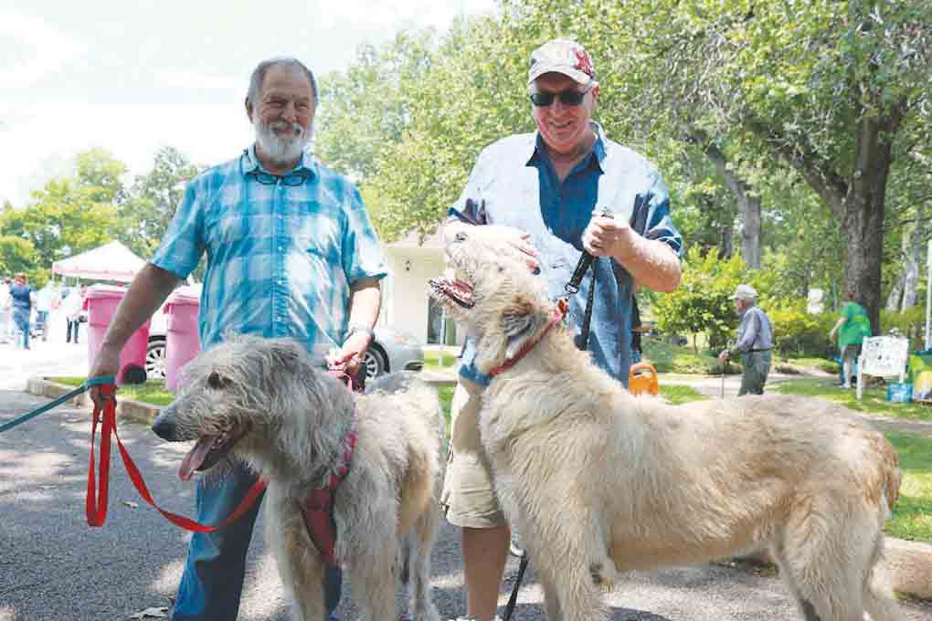 Don McDaniel and Frank Cairns stand with their Irish Wolf Hounds during the second annual Tyler Celtic Festival on the grounds of the Goodman-LeGrand House & Museum on Saturday. (Schuyler Wick/Staff)