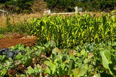 Shambala Farm-16