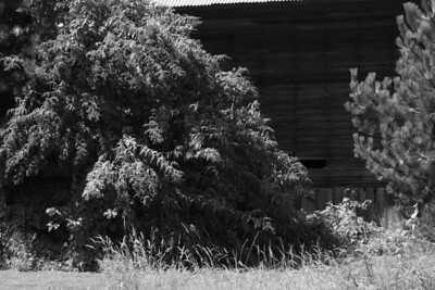 Shambala Farm-28