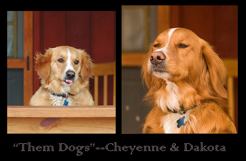 Cheyenne and Dakota belong to my nearest Mtn. neighbors--and good friends--Gary and Kim Whiteley.  Cheyene and Dakota love the Mountain life (barking at deer, bears, and chipmunks--in addition to eating leftovers and snoozing on the sofa).