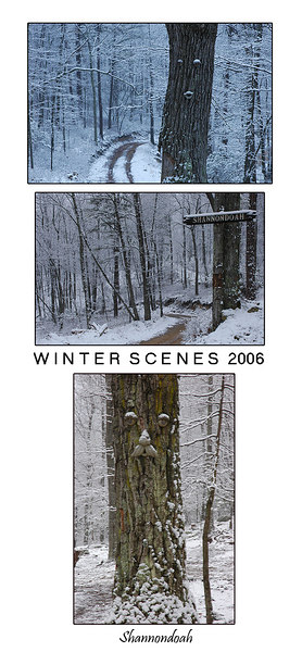 "This photo is a montage of ""Tree Faces"" and the infamous ""Shannondoah"" sign during the late winter weeks of 2006."