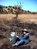 Sandy grooms a 5-6-foot sapling that may recover.