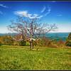 Tree near Shenandoah National Park Headquarters