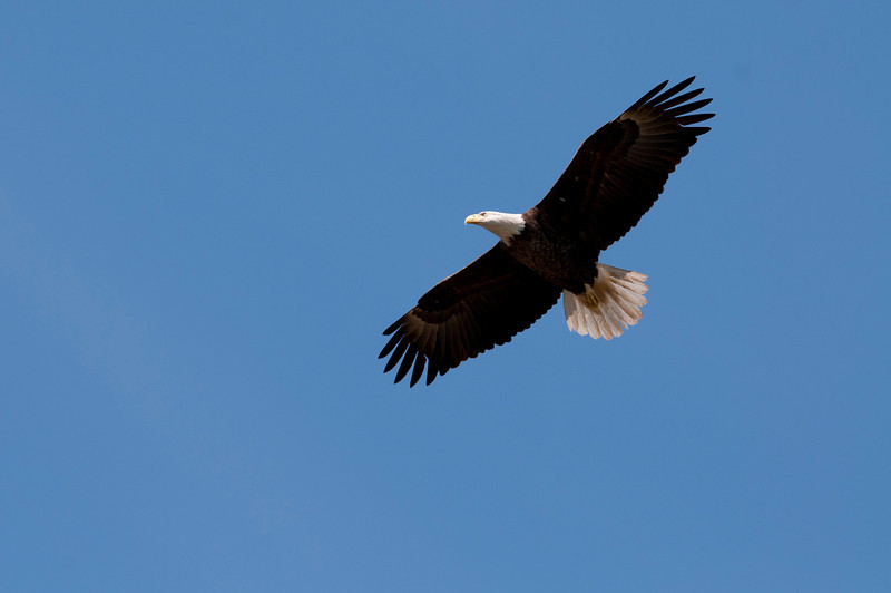 Eagles at Shiloh National Battlefield