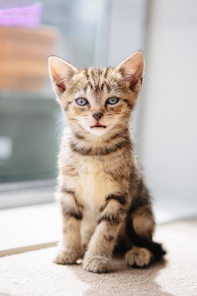 Cutey Kitten
