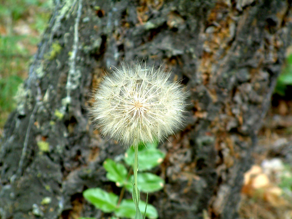 Sometimes weeds are beautiful.
