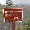 We spent two weeks in Hawaii and I never saw a nene, but I saw a lot of these signs.