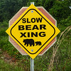 Bear Crossing