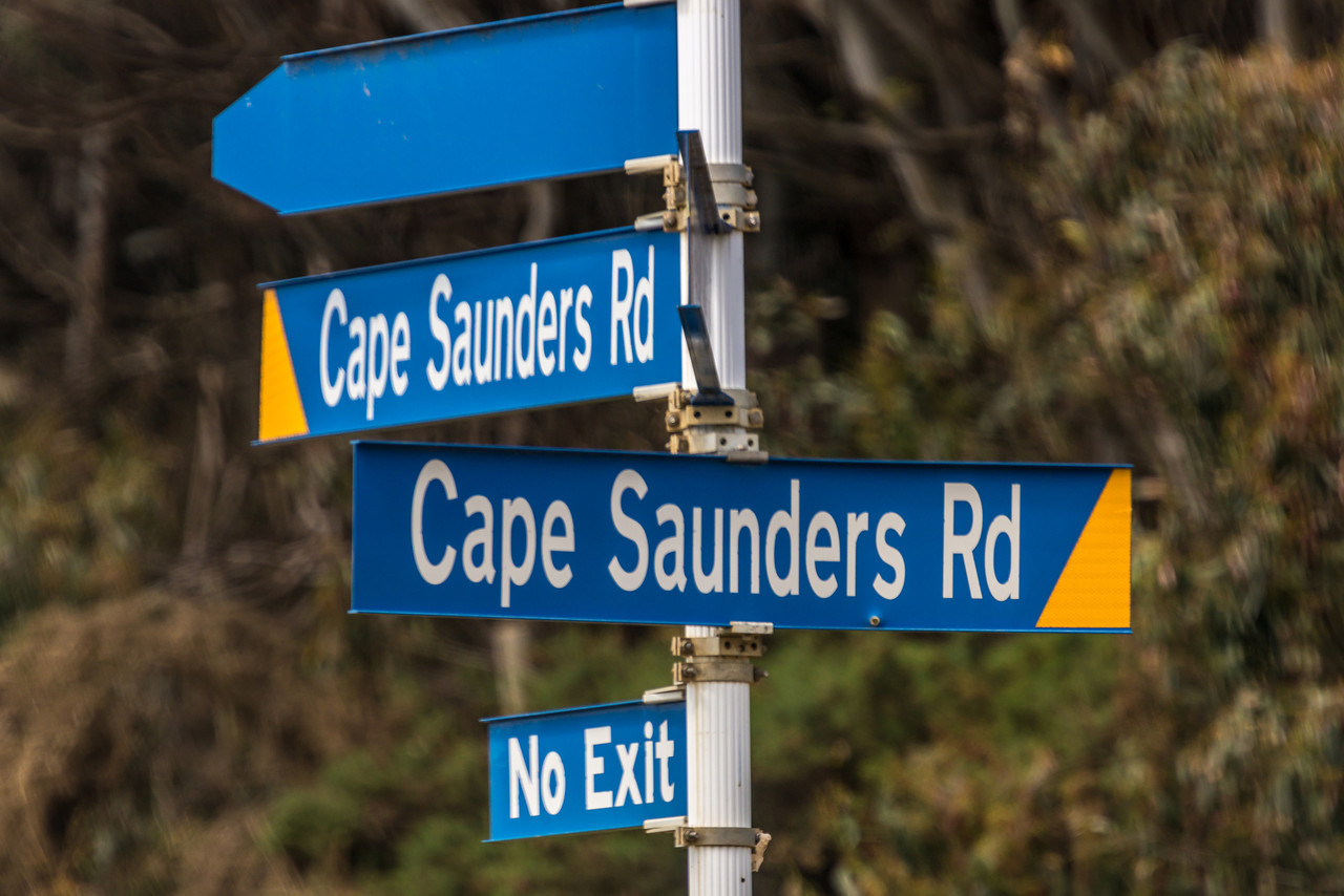 All roads lead to Cape Saunders... Otago Peninsula