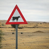 Cattle Crossing Sign in the dusty Maasai area in Tanzania