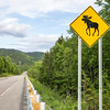 Moose Crossing in Gaspesie National Park, Canada.
