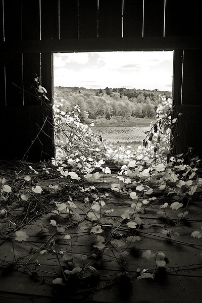 Through the Barn Door<br /> ©2009 Peter Aldrich